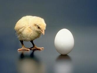 Мук-Я, мытье яиц птицы на предприятиях пищевой промышленности, общественного питания, в школьных и дошкольных учреждениях