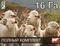Электропастух для овец и ягнят на 16 га / 1,6 километра в 3 ряда