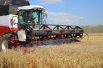 У Ростовской области самый высокий показатель по урожаю зерна в России