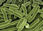Устойчивые к антибиотикам бактерии обмениваются генами во время спячки