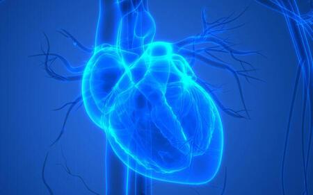 В Чикаго напечатали человеческое мини-сердце