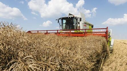 Липецкие аграрии собирают рекордные урожаи масличных