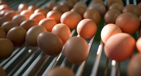 Российский производитель яиц внедрил дополненную реальность в свою продукцию