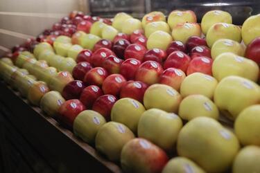 Конференция по переработке овощей и фруктов пройдет на выставке «Агропродмаш-2020» в новом формате