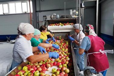 Первая партия концентрированного яблочного пюре, «Новые технологии», Пензенская обл.