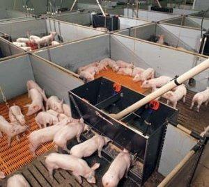 нескольких одинаковых бункерное кормление свиней фото способности сохранять