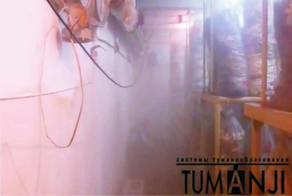 Туманообразующие системы для грибов